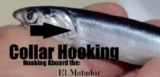 tuna, albacore fishing, charters, derby, charterboat, association, ocean sportfishing, winner, tuna derby